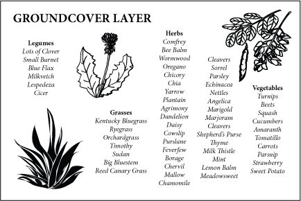 Ground Cover Layer