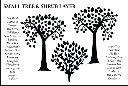 Permaculture Small Tree & Shrub Layer