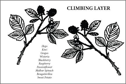 Climbing Layer