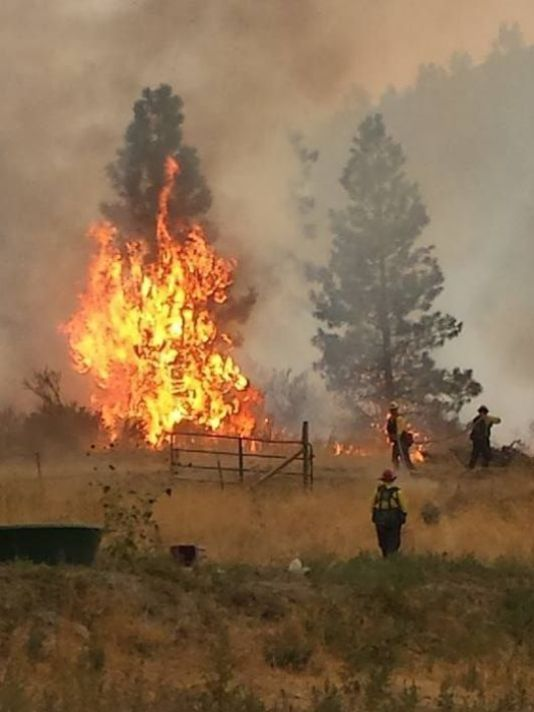 Forest Fire's Effect on Livestock