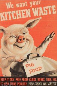 Raising Pigs