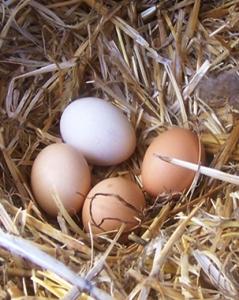 Egg-Nest