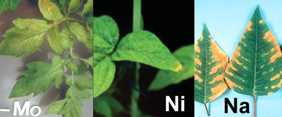 Nutrient_Deficiency_4