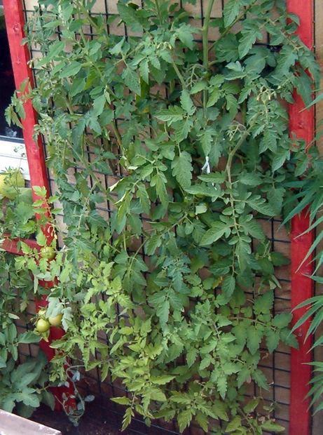 vertical-garden-10