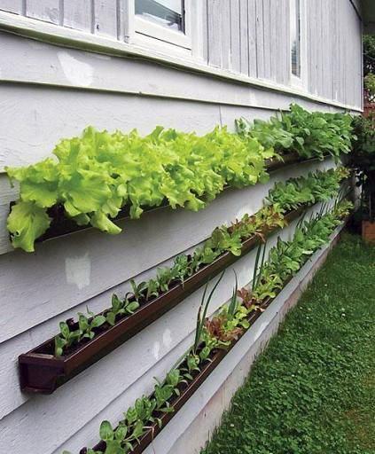 vertical-garden-5