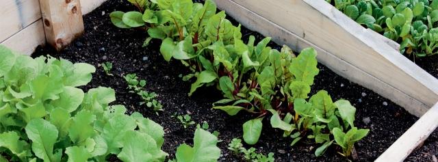Succession-Planting-Feaure
