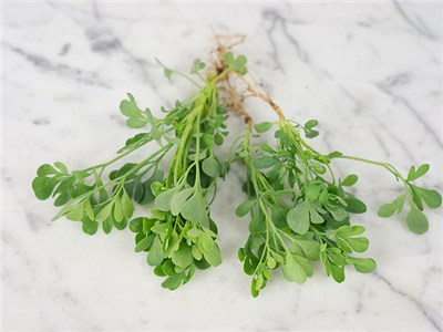 Common Rue Photo courtesy Baker Creek Heirloom Seeds.