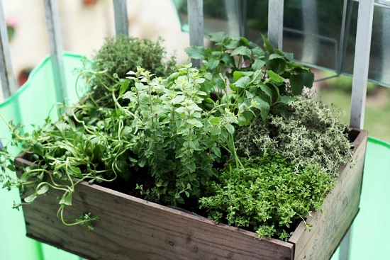 Herb-Box-Photo-by-Suzette-via-Flickr